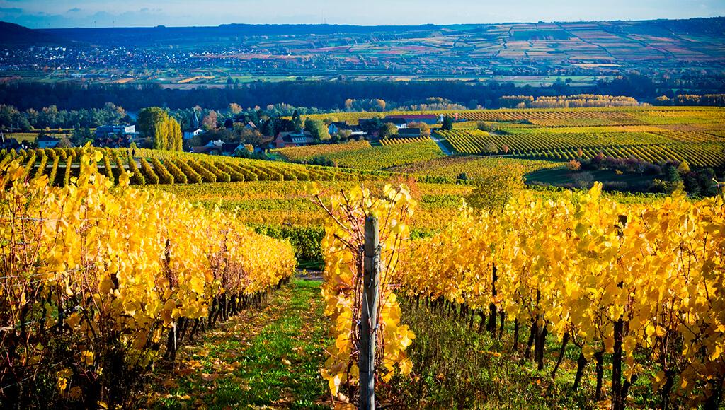 50 Degrees Vineyard in fall