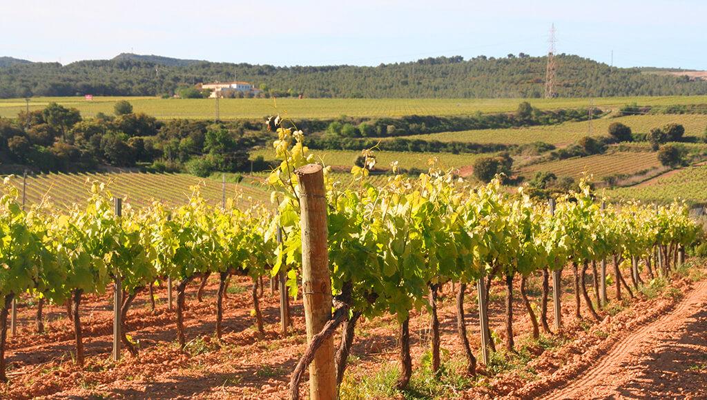Cavas Hill Vineyards