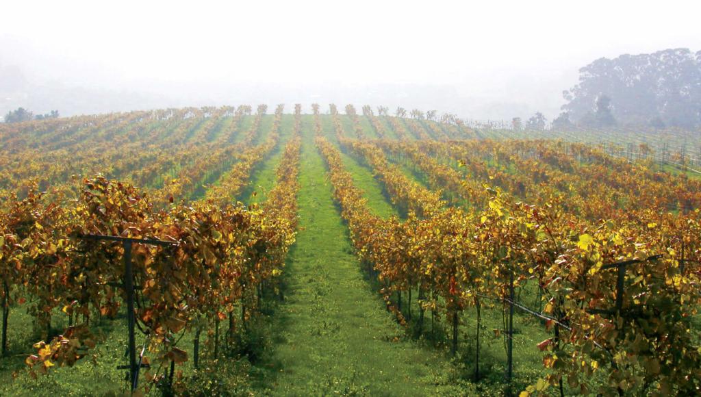 Ferrer Family wines vineyard