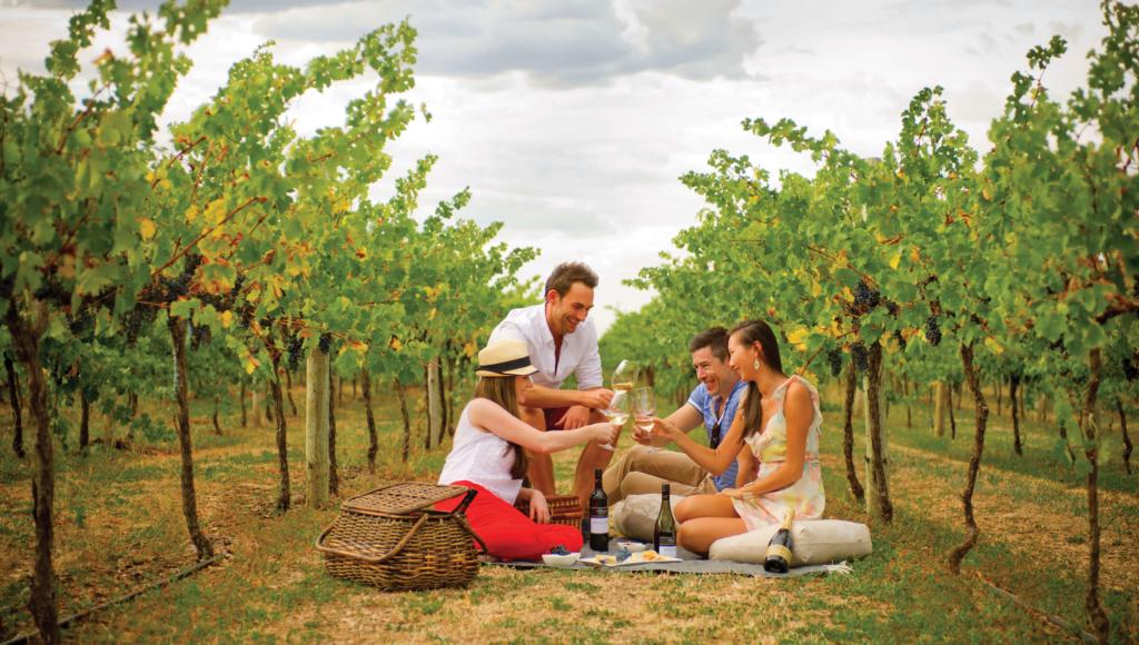 Katnook Estate picnic in vineyards