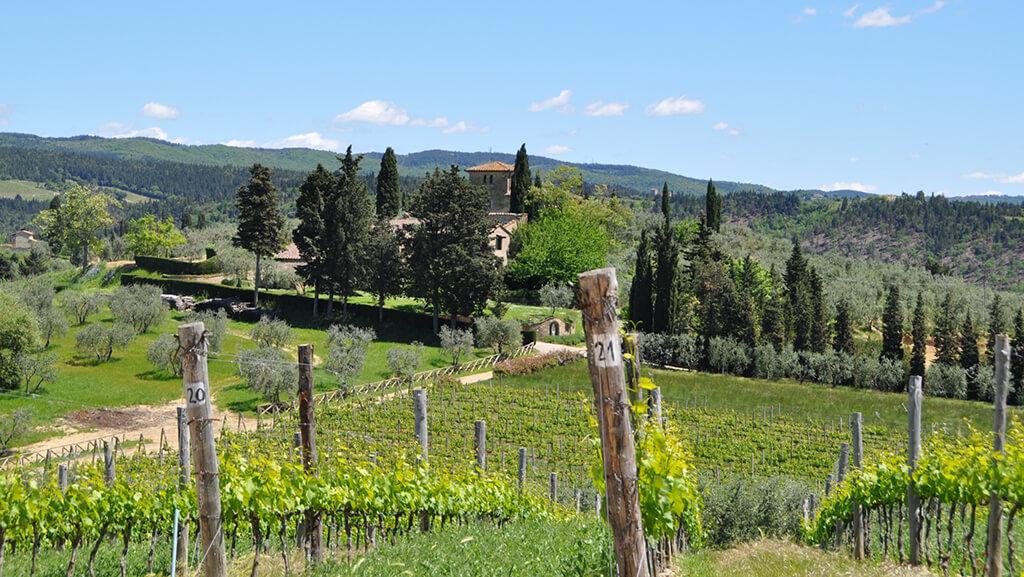 Castello di Monsanto Vineyards