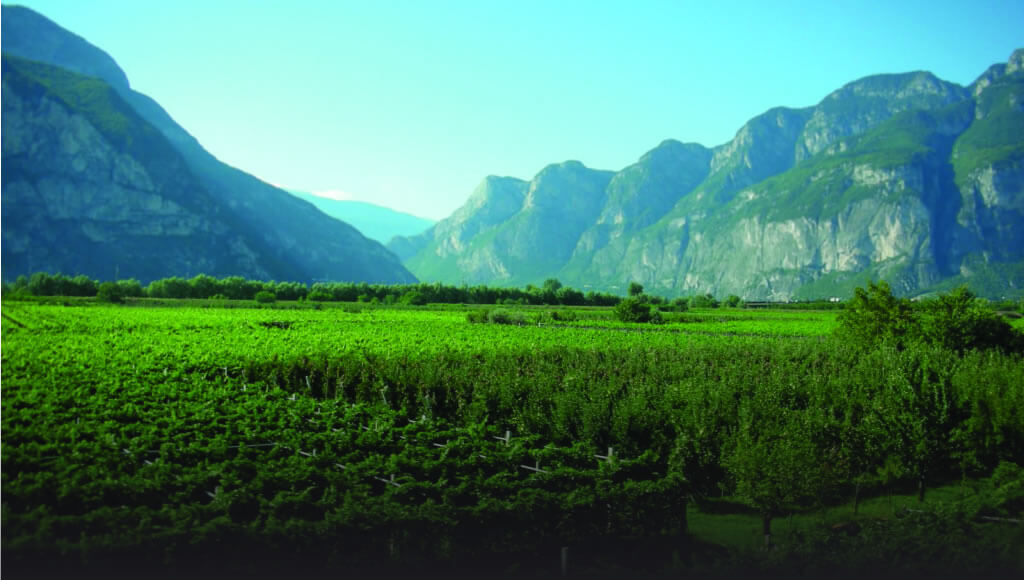 vineyards with mountains