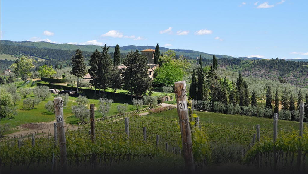 Castello di Monsanto vineyard