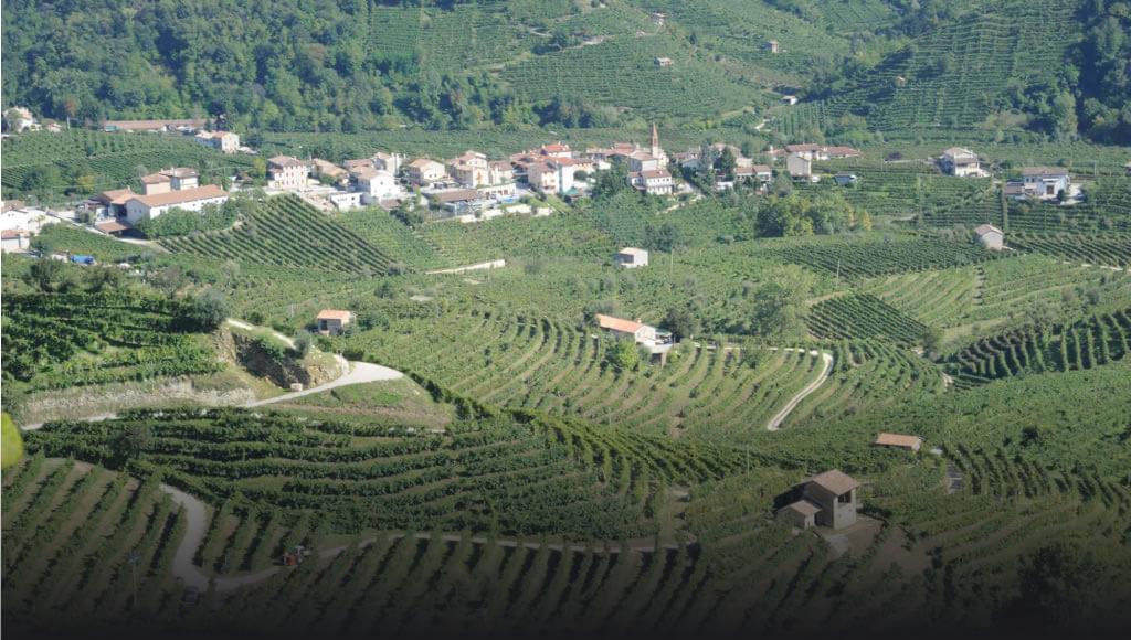 Mionetto Vineyards