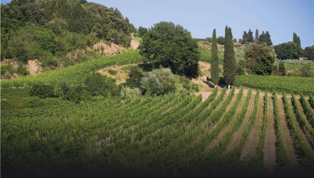 Monrosso vineyards