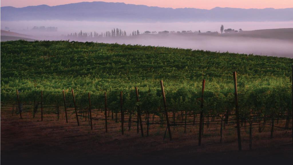 WindVane vineyards